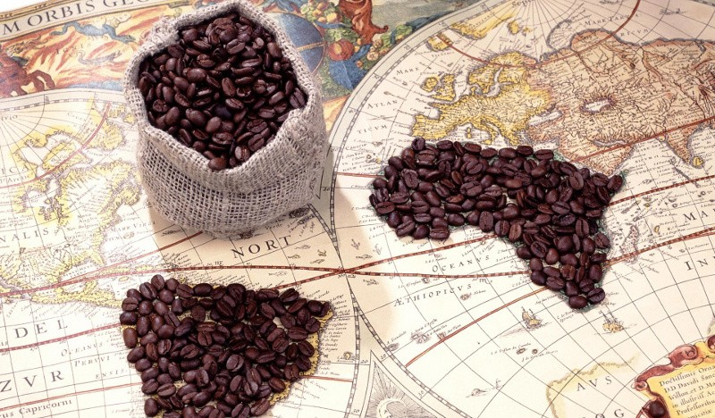 История появления кофе: происхождение и распространение напитка